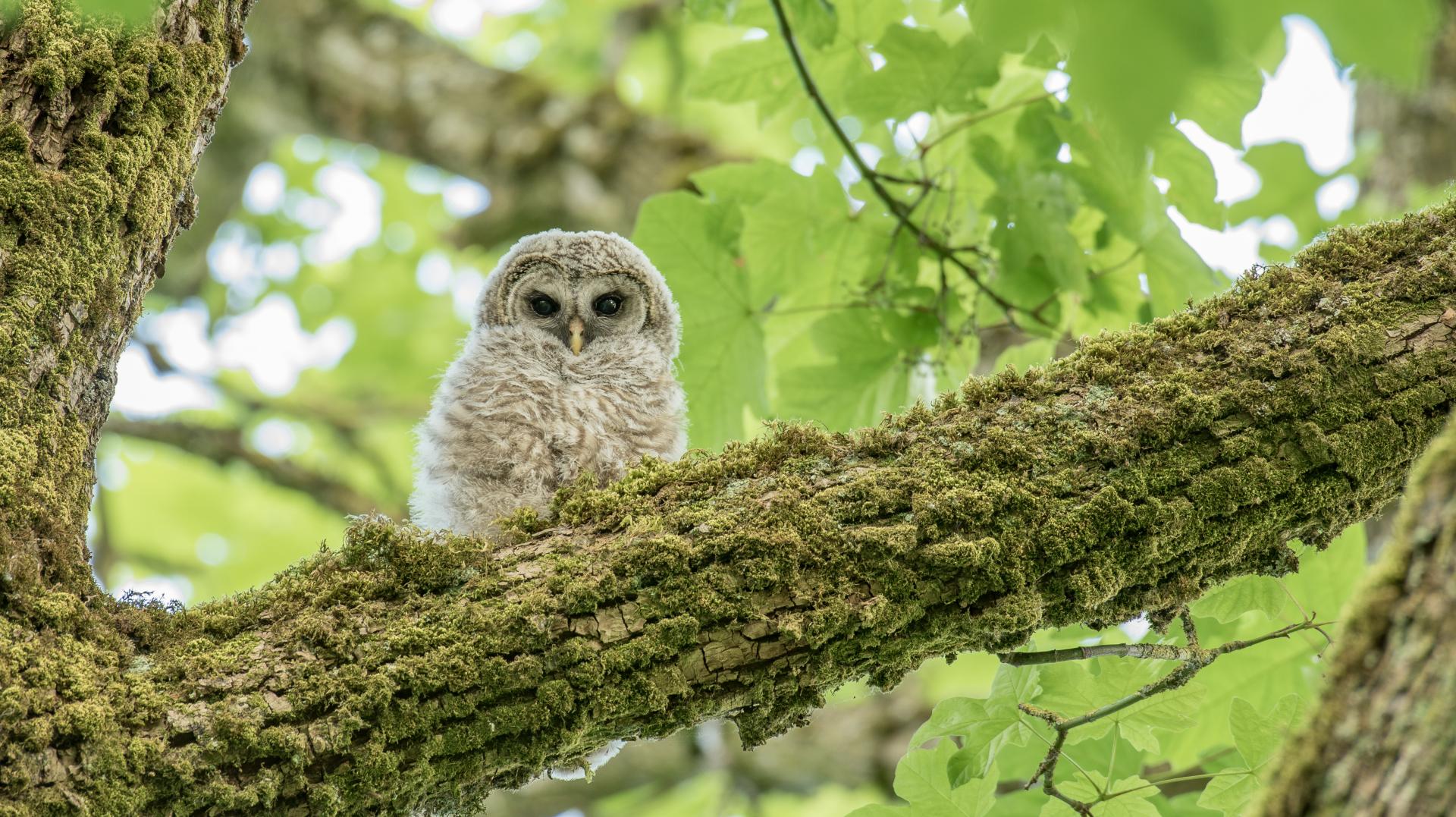 Owls and Sapsuckers Photo walk May 20 2017