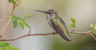 2018 Birds of Spring Photo tours