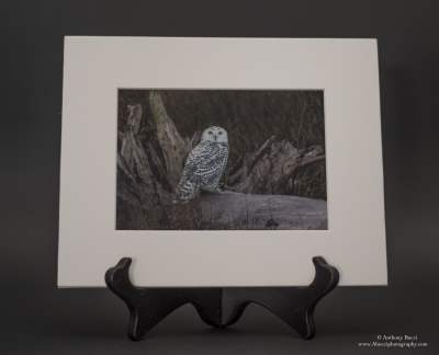 Snowy Owl 5x7 Matted Print