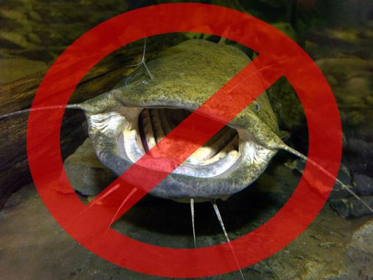 Ten don'ts too Flathead Fishing