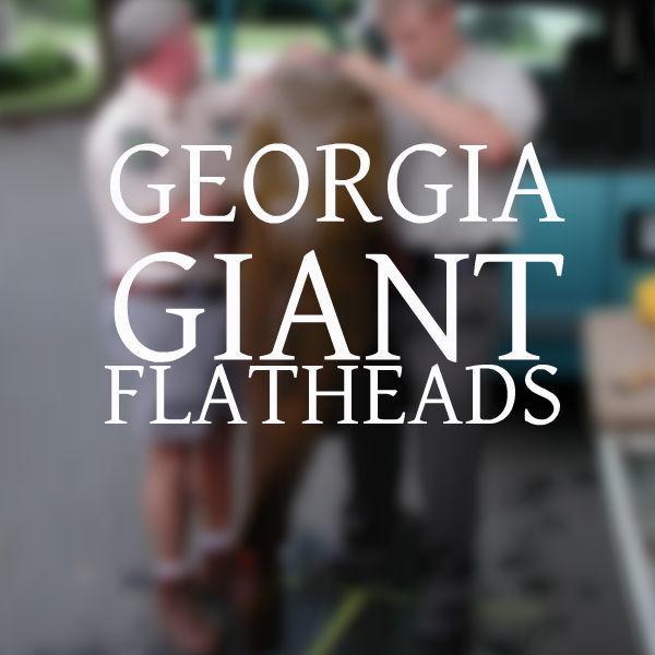 Georgia Giant Flatheads