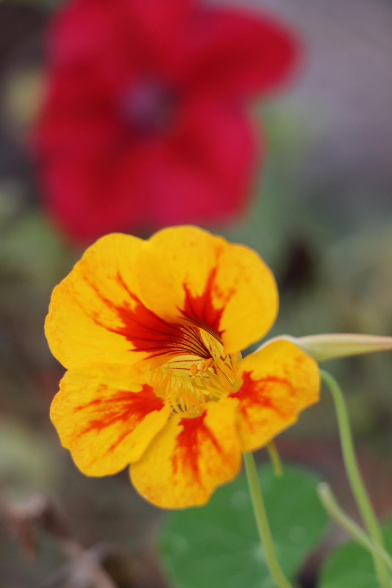 Edible Flowers- NA '18