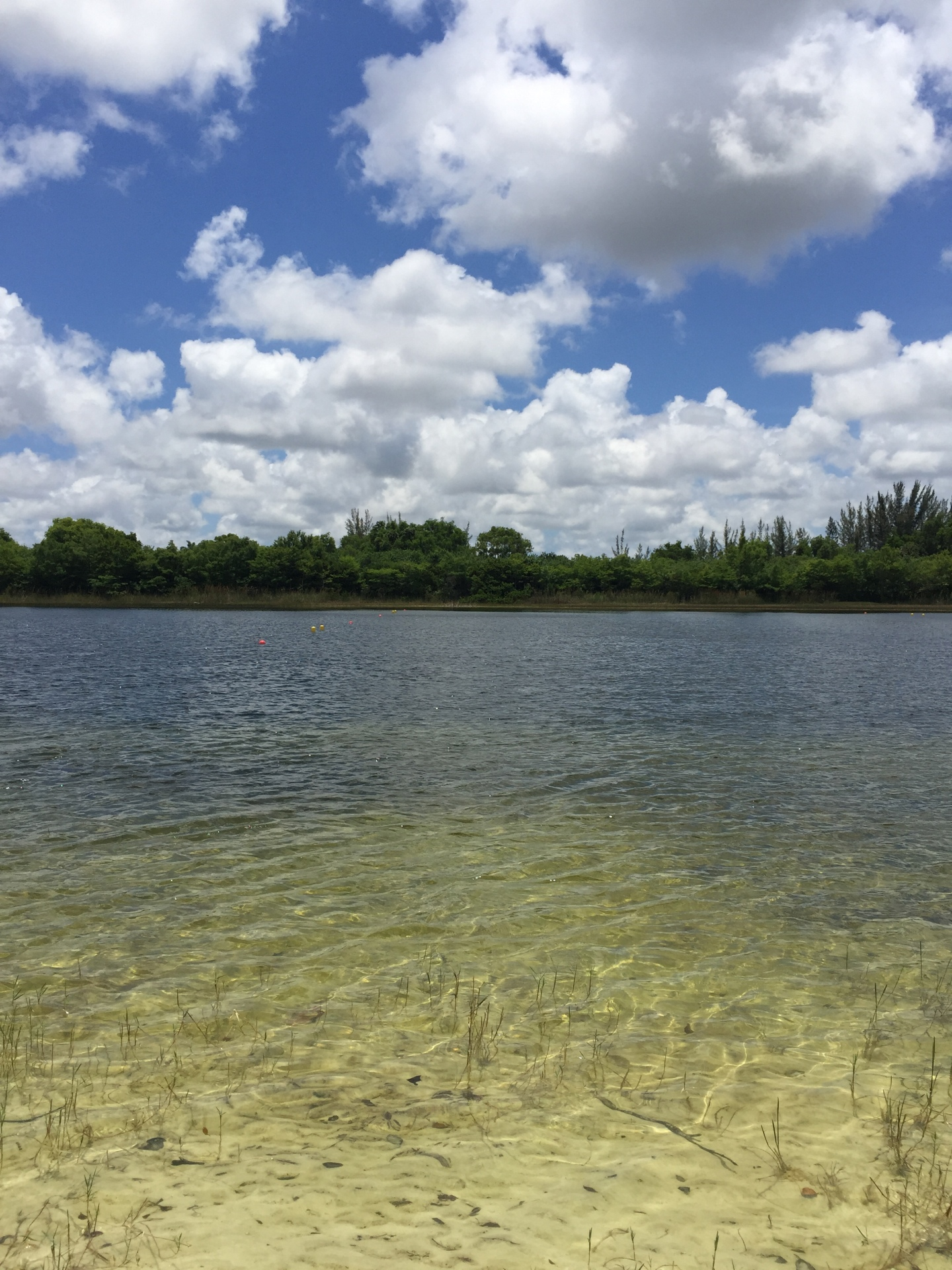 This is a photo I took while enjoying a peaceful nature walk in Boca South County Regional Park.