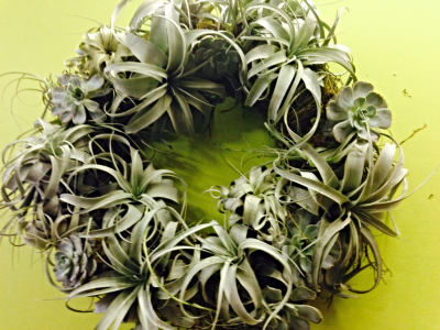 Air Plant and Succulent  Wreath