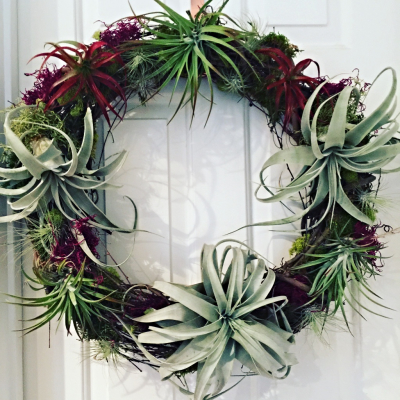 Live Air Plant Wreath