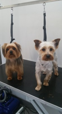 Dog Groomers in Southampton | Decadent Dogs