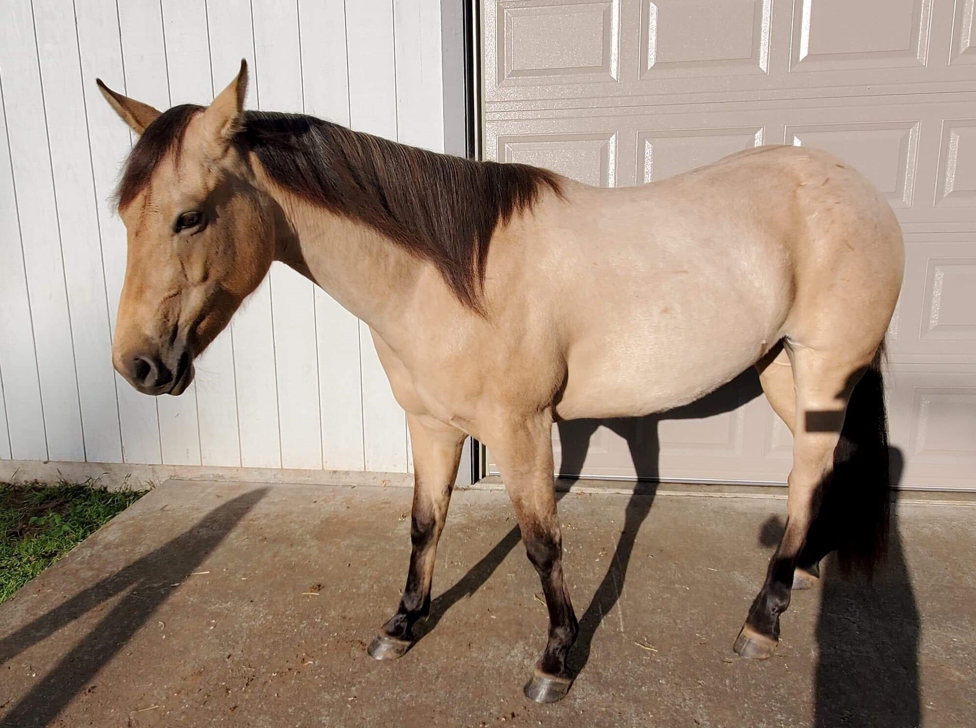 AQHA Gist Gun It ~ 3yo