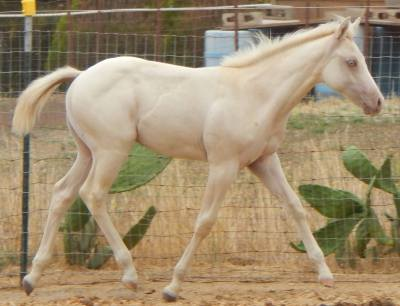 AQHA Winning Colors