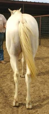 AQHA Winning Colorz ~ 2.5 years