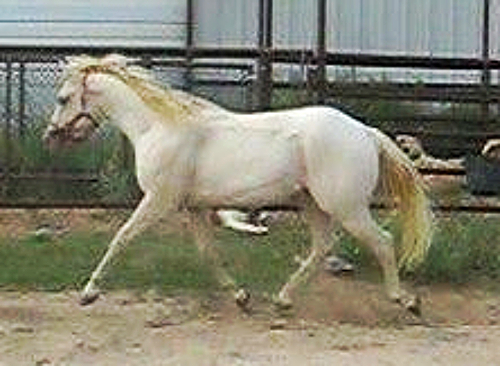 AQHA Winning Colorz ~ 3 years
