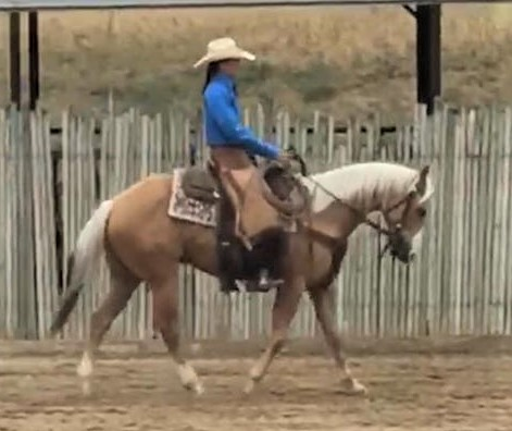 AQHA Dreams N Champagne ~ 4 yrs