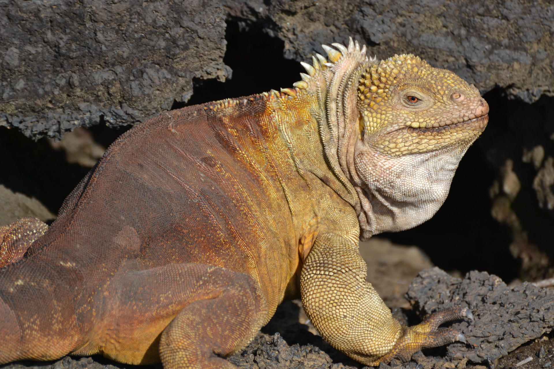 The 2015 Expedition to Wolf Volcano: A Return to Galapagos