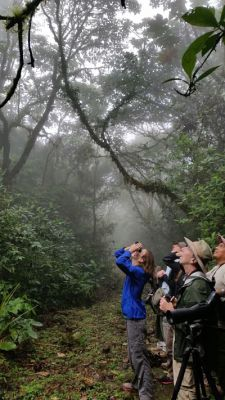 Chagres National Park. Panama. Bird watching in Alto Mamoni.