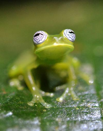 Amphibian survival...