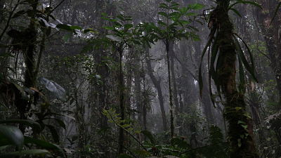 Deep in the cloud forest!