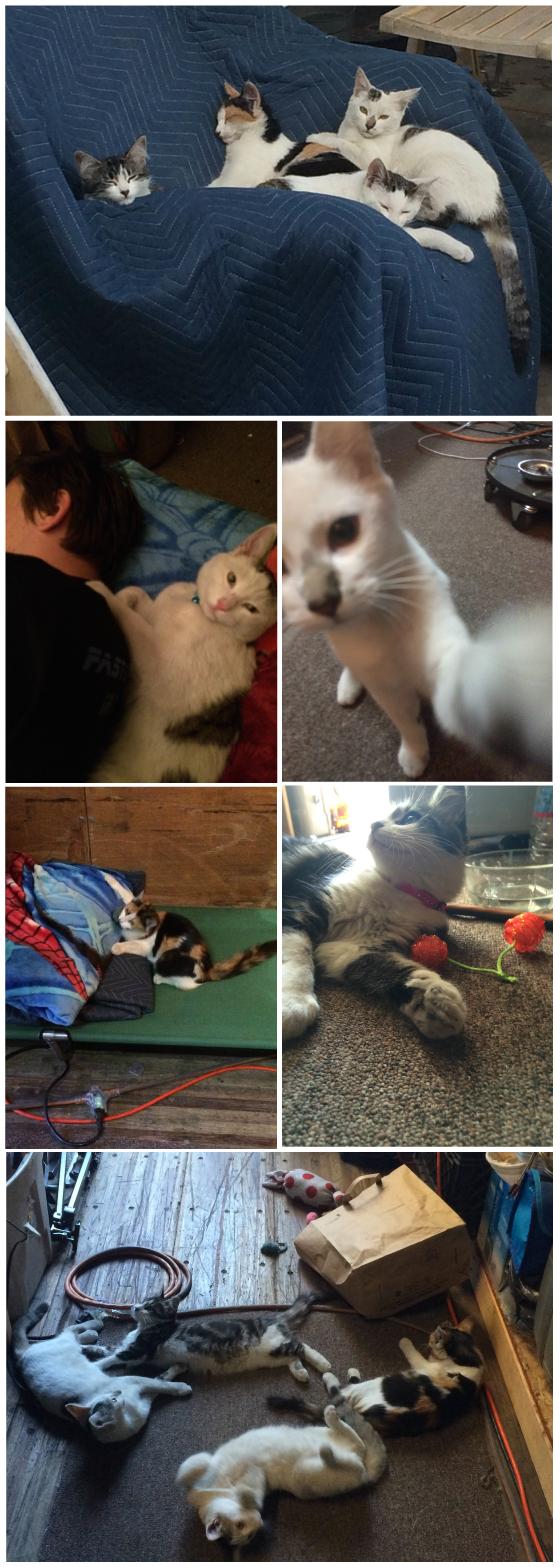 Le-Kitties