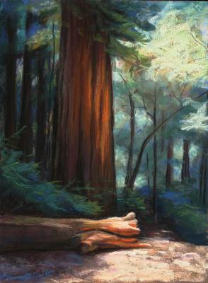 Redwood Radiance