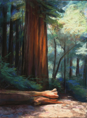 Redwood Radiance