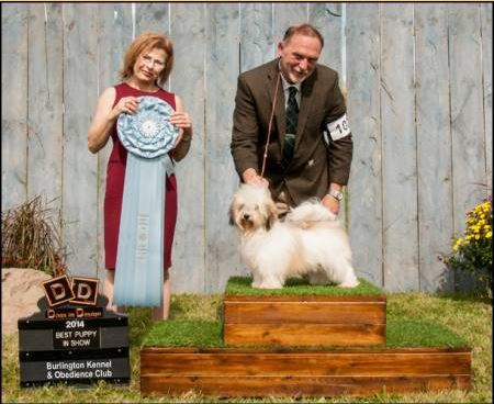 Stella wins Best Puppy in Show at Burlington ON 2014