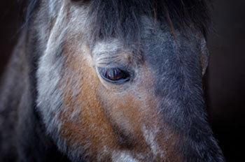 Geriatric Horse Nutrition