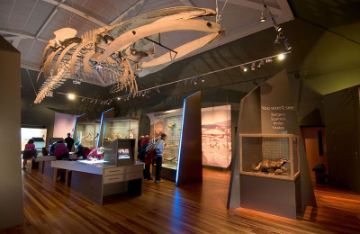 Manx Museum - Natural History Gallery