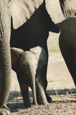 BABY ELEPHANT AWW