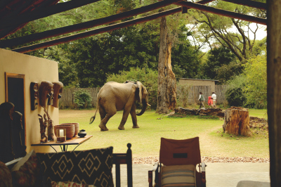 ELEPHANTS IN OUR CAMP