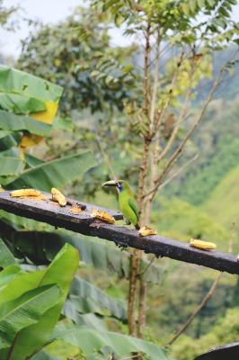 TREEHOUSE BIRD HAVEN