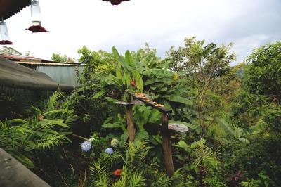 NECTAR & HUMMINGBIRDS
