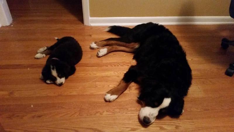 Izzy & Bobo