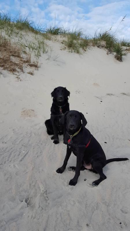 Unconditional Dog Story ~ Reef & Keoki