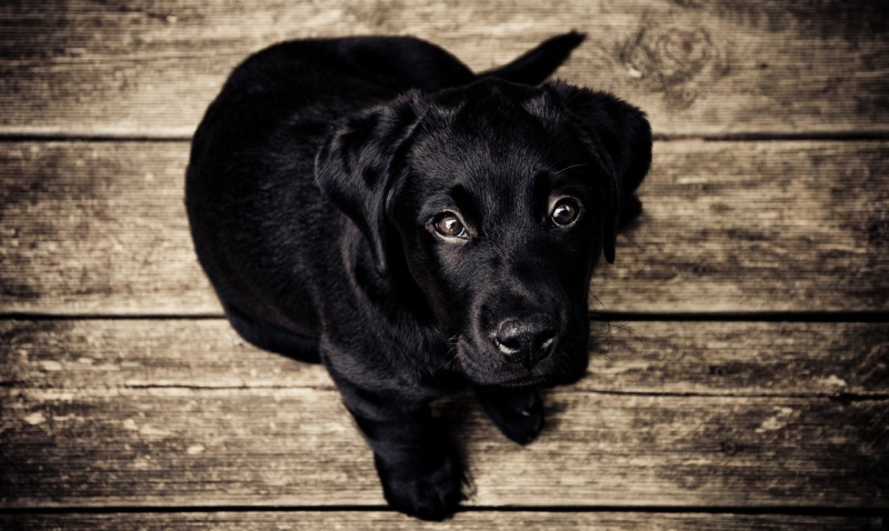 Canine Cognition