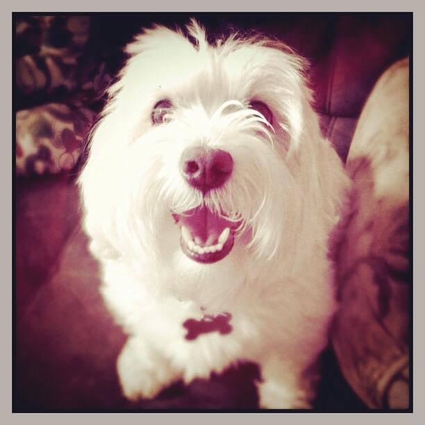 Unconditional Dog Story ~ Oscar