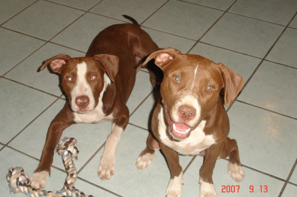 Unconditional Dog Story ~ Zeke, Nyla & Remy