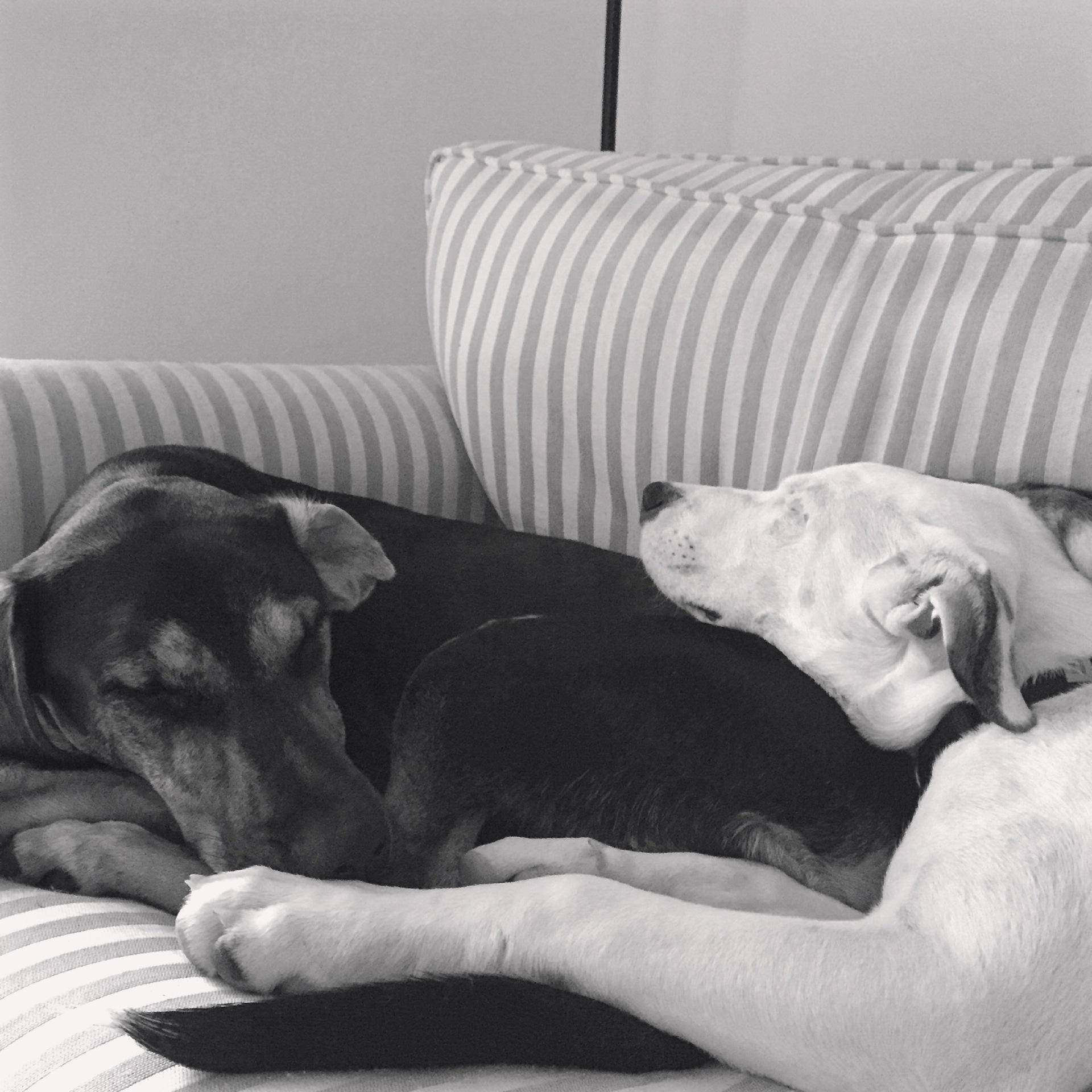 Unconditional Dog Story ~ Samson & Lola