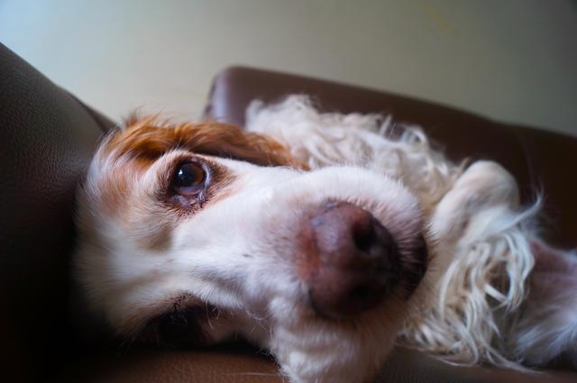 Bee Pollen & Your Dog
