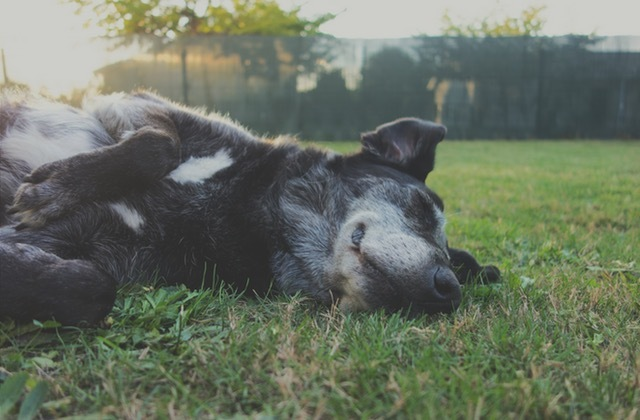 Canine Nutrition Part 8: Dog Food Labels