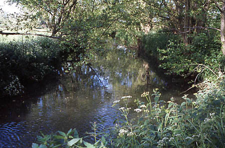 The Mill Leat in early Summer