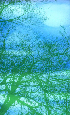 painted green trees on blue glass by Sarah Hall