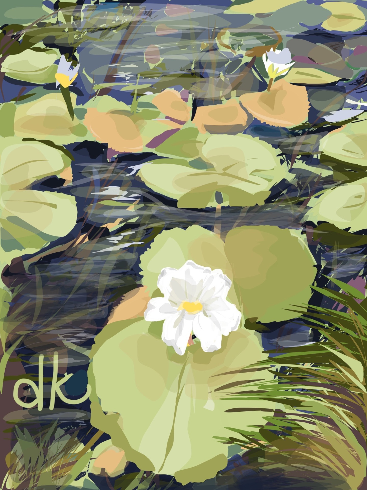 Lilly of the Pond