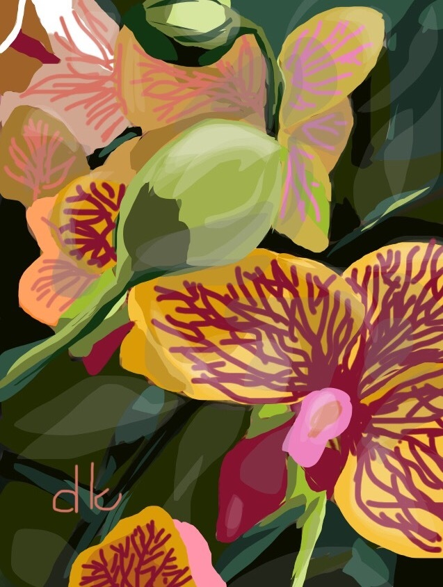 Sarasota Orchid
