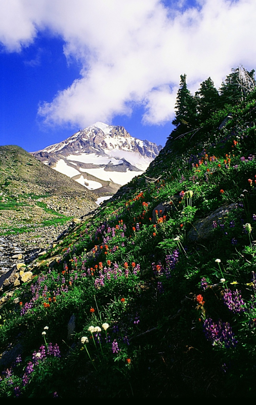 Oregon Cascade Wildflower Tour Guiding Tours
