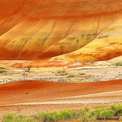 Painted Hills Tour Guiding Services