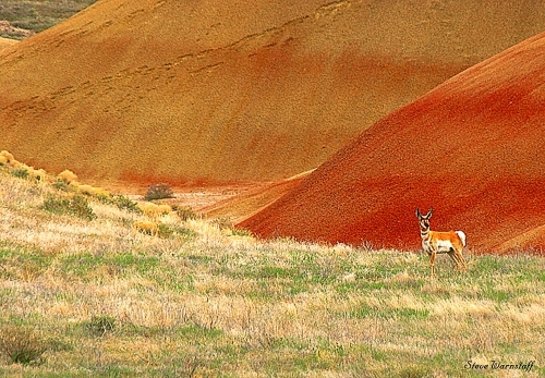 Carroll Mountain Painted Hills Unit Tour Guiding /Services
