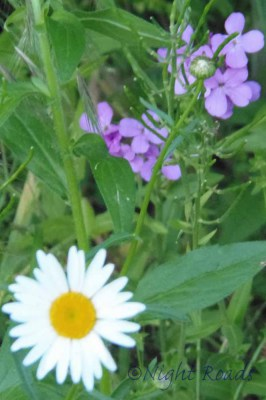 2013_flower 010