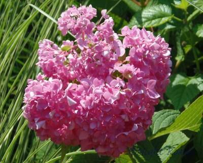 2013_flower 038