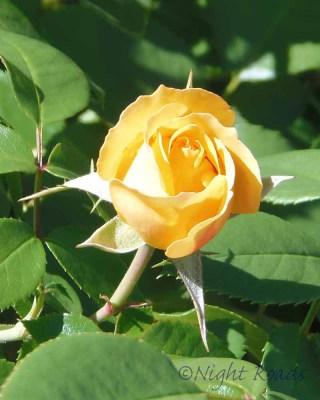 2013_flower 043