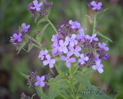 2013_flower 048