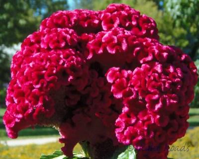 2013_flower 066