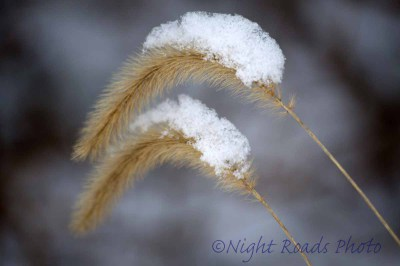 2016_winter 005